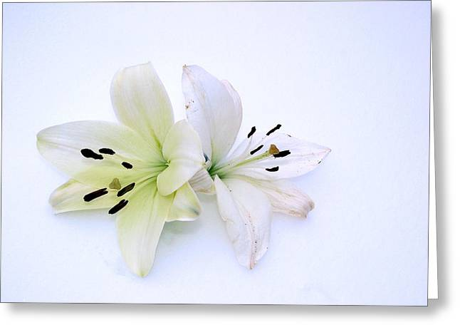 White As Snow Greeting Cards - Twin Purities Greeting Card by Irma BACKELANT GALLERIES