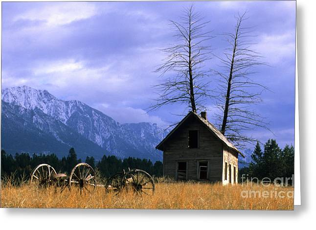 Pioneer Homes Photographs Greeting Cards - Twin Tree Cabin Greeting Card by Bob Christopher