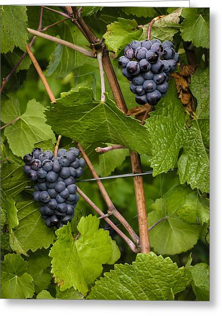 Pinot Noir Greeting Cards - Twins Greeting Card by Jean Noren