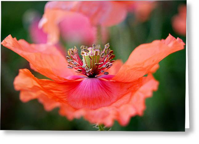 Wisconsin Wildflowers Greeting Cards - Twirling Floral Skirt Greeting Card by Bill Pevlor
