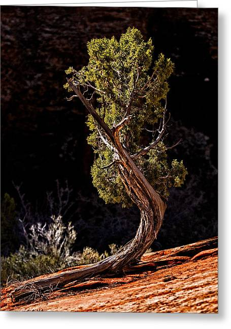 Twisted Reach Greeting Card by Christopher Holmes
