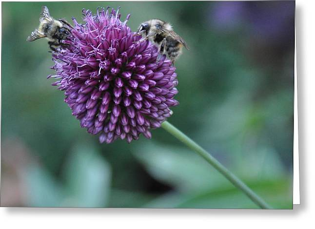 Searcy Greeting Cards - Two Bees Greeting Card by Tanya  Searcy