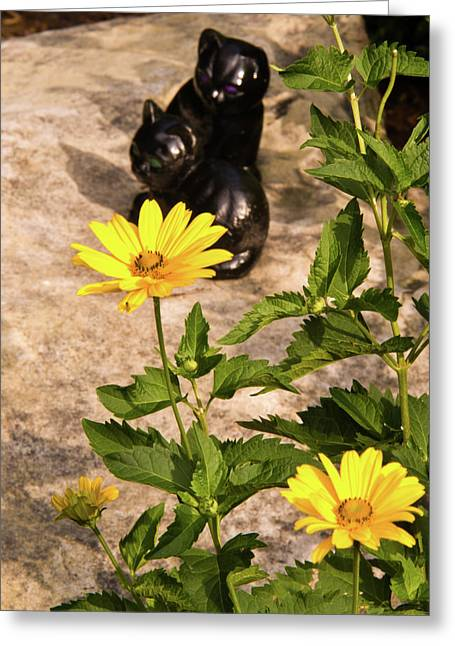 Sunflower Joy Greeting Cards - Two Black Cats and False Sunflowers Greeting Card by Douglas Barnett