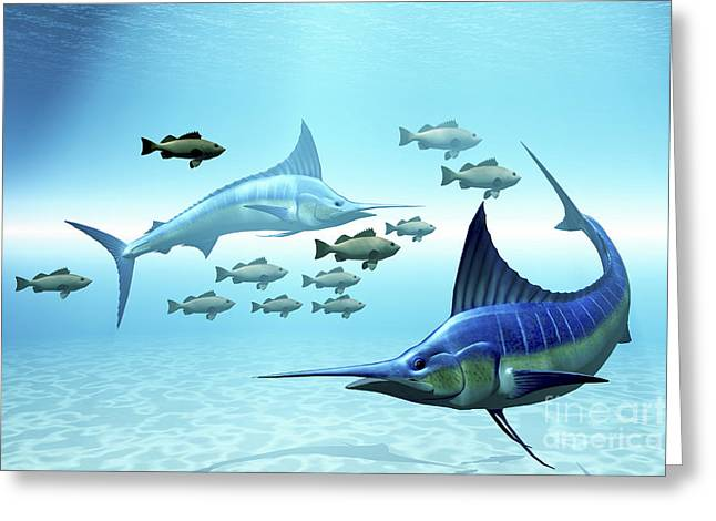 Swordfish Greeting Cards - Two Blue Marlins Circle A School Greeting Card by Corey Ford