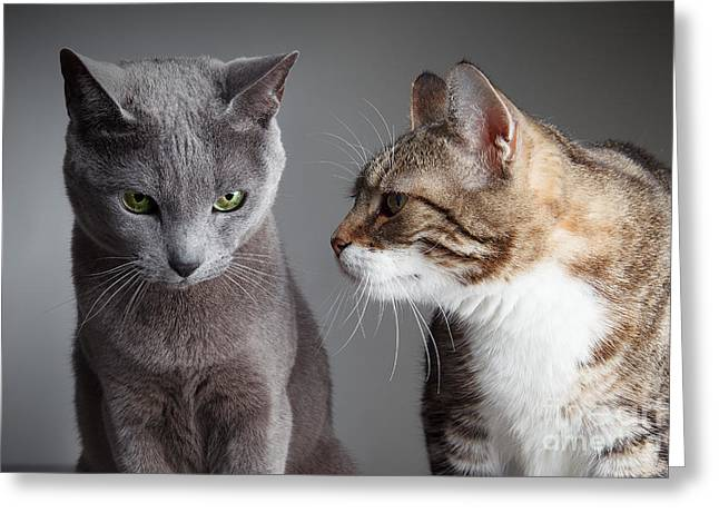 Tricolored Greeting Cards - Two Cats Greeting Card by Nailia Schwarz