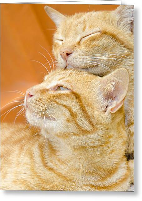 Two Cats Sleep Greeting Card by Nattapon Wongwean
