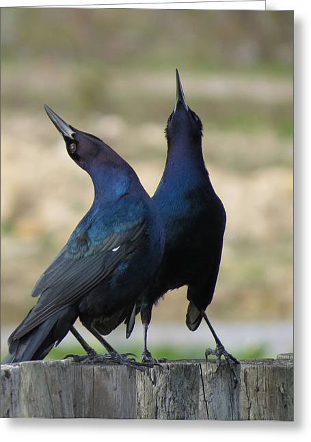 Two Crows Greeting Cards - Two Crows Greeting Card by Vijay Sharon Govender