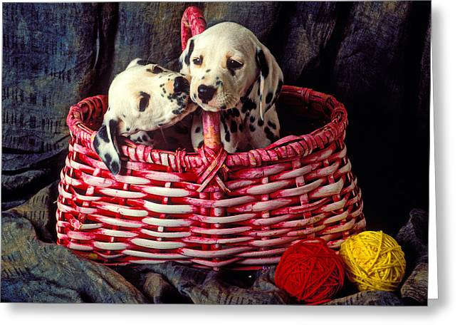 Short Hair Greeting Cards - Two Dalmatian Puppies Greeting Card by Garry Gay