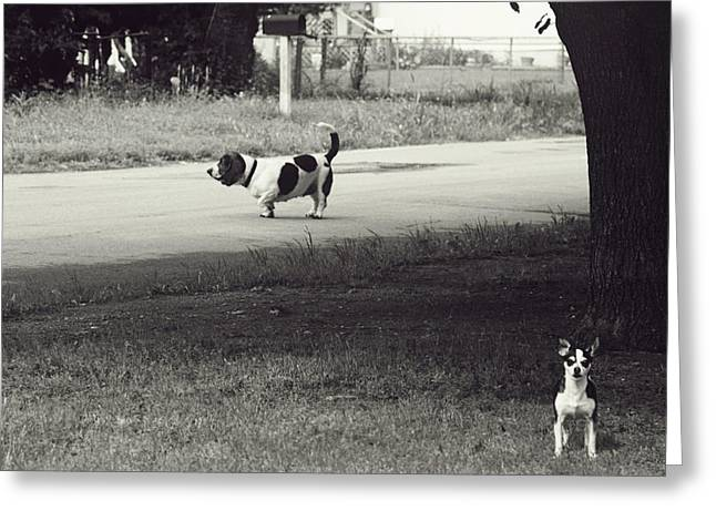 Sunday Stroll Greeting Cards - Two Dogs Greeting Card by Toni Hopper