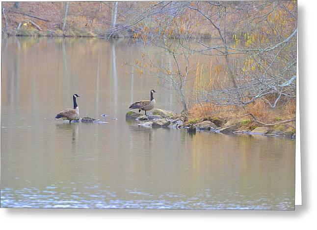 Wadding Greeting Cards - Two Geese a Strolling Greeting Card by Ruth Yvonne Ash