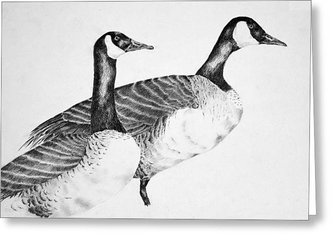 Canadian Drawings Drawings Greeting Cards - Two Geese Greeting Card by Mick Gwin