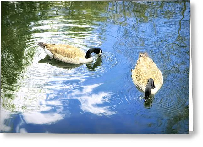 Two Geese Greeting Card by Scott Norris