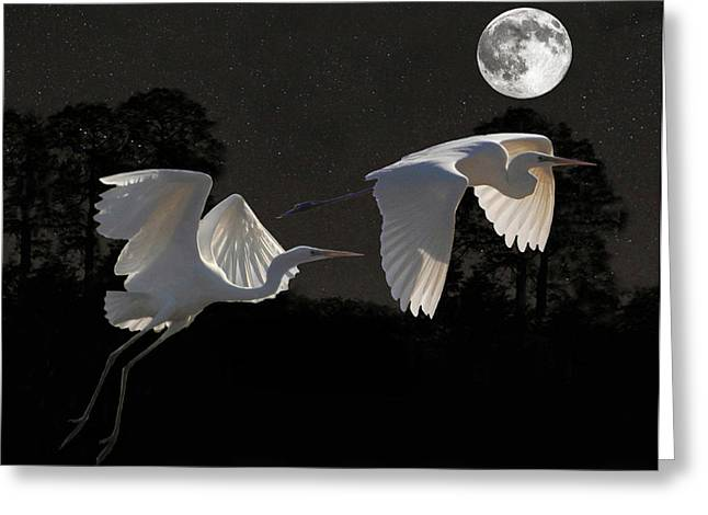 Acroplolis Greeting Cards - Two Great Egrets  Greeting Card by Eric Kempson