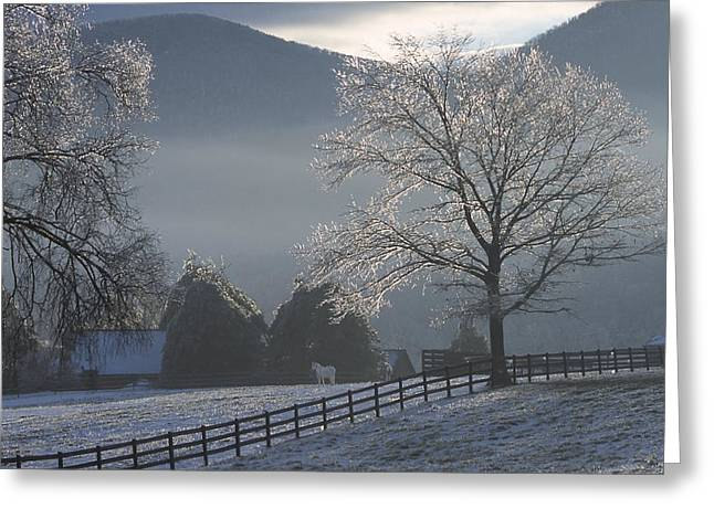 Snow Tree Prints Greeting Cards - Two Horse in an Icy Winter Sunrise Greeting Card by Jeff Clinedinst