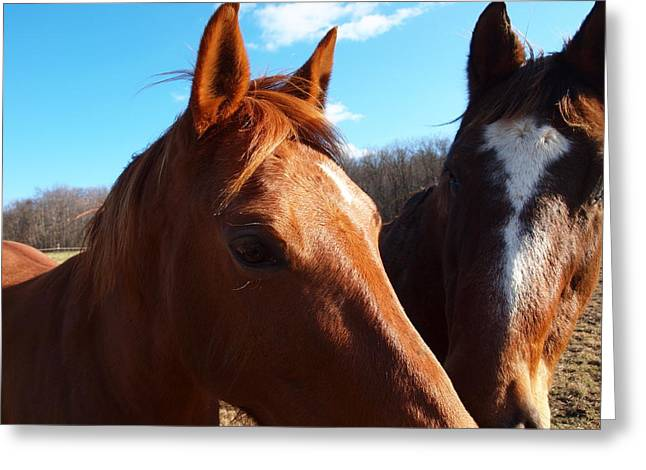 Log Cabins Framed Prints Greeting Cards - Two Horses In Love Greeting Card by Robert Margetts