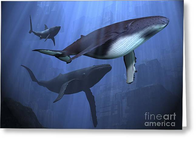 Ancient Ruins Digital Art Greeting Cards - Two Humpback Whales And A Shark Swim Greeting Card by Corey Ford