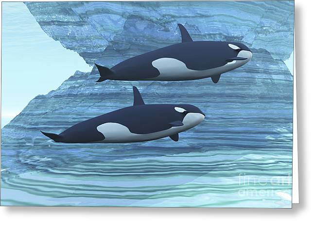 Orca Digital Art Greeting Cards - Two Killer Whales Swim Around Submerged Greeting Card by Corey Ford