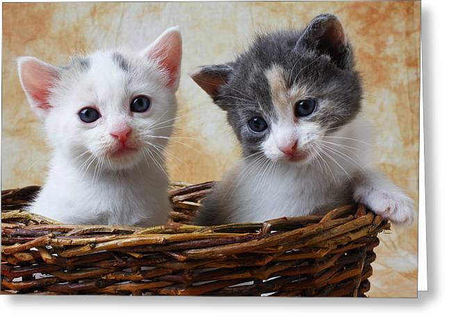 Domestic Pets Greeting Cards - Two kittens in basket Greeting Card by Garry Gay