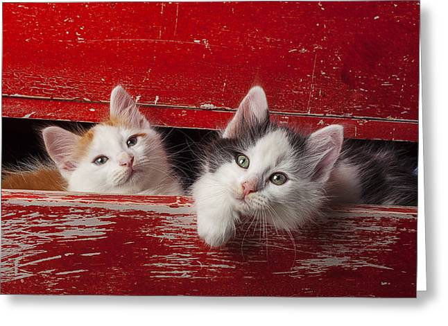 Two Kittens In Red Drawer Greeting Card by Garry Gay