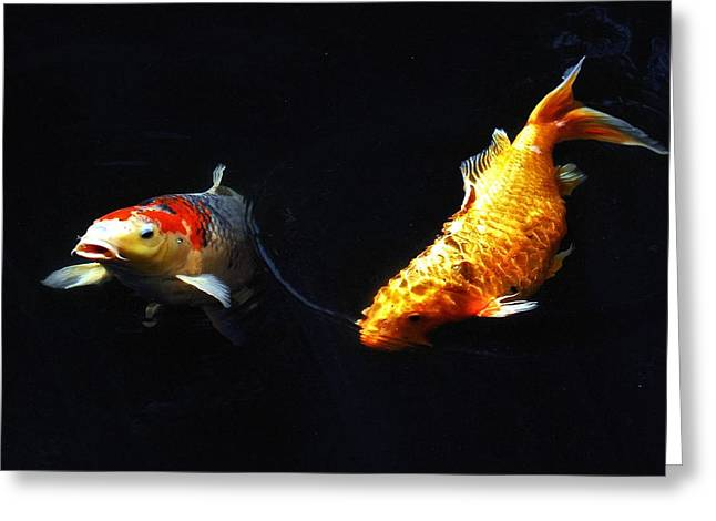 Oranda Greeting Cards - Two Koi Greeting Card by Don Mann