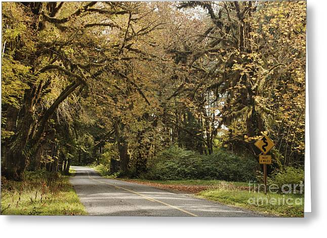 Overhang Greeting Cards - Two Lane Road Passing Under Trees Greeting Card by Ned Frisk