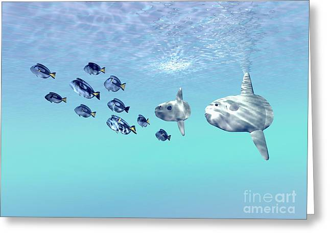 Sunfish Greeting Cards - Two Large Sunfish Escort A School Greeting Card by Corey Ford