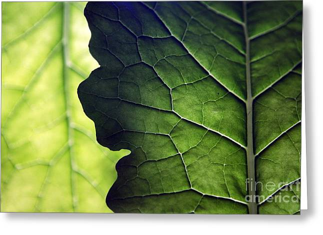 Two Pyrography Greeting Cards - Two leaves of cabbage Greeting Card by Tanya Polevaya