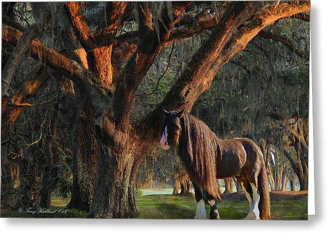 Two Majestic Souls Greeting Card by Terry Kirkland Cook