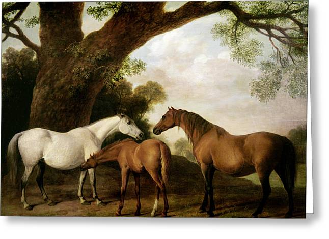 Young Greeting Cards - Two Mares and a Foal Greeting Card by George Stubbs