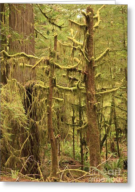 Moss Green Greeting Cards - Waltzing in the Rainforest Greeting Card by Carol Groenen