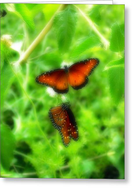 Barry Styles Greeting Cards - Two On A Bush Greeting Card by Barry Styles