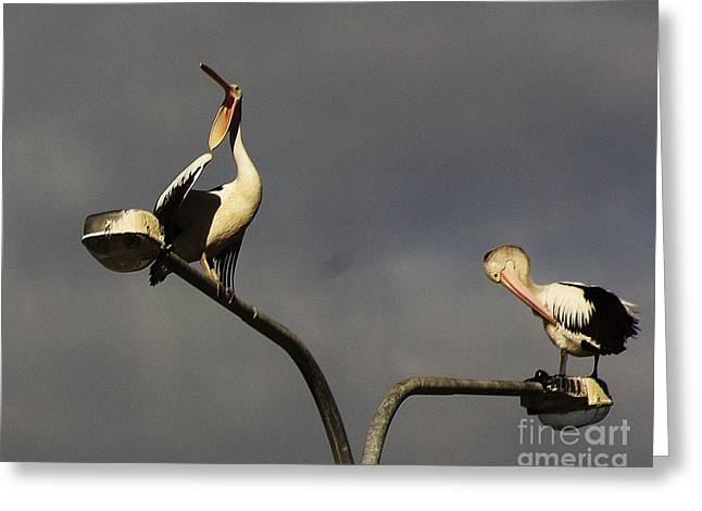 Seabirds Greeting Cards - Two on a pole Greeting Card by Blair Stuart