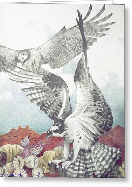 Osprey Drawings Greeting Cards - Two Ospreys Greeting Card by Kyra Belan