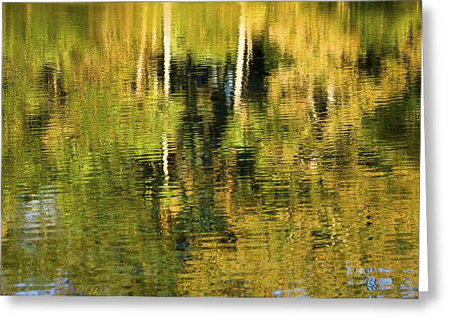 Trees Reflecting In Water Greeting Cards - Two Palms Reflected In Water Greeting Card by Rich Franco