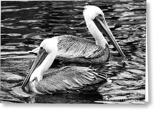 Half Moon Bay Greeting Cards - Two Pelicans . 7D8238 Greeting Card by Wingsdomain Art and Photography
