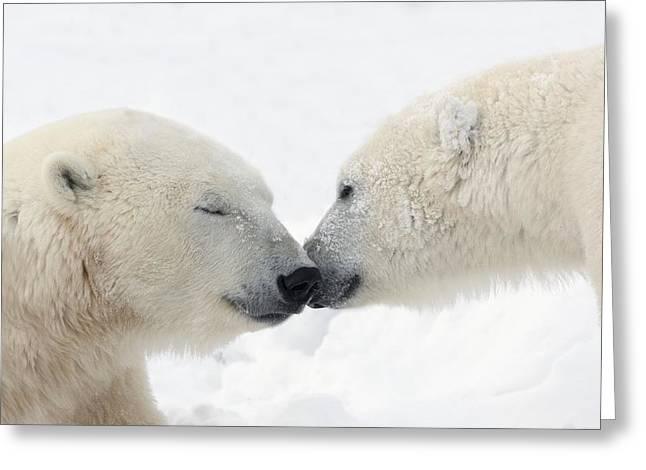 Love The Animal Greeting Cards - Two Polar Bears Ursus Maritimus Greeting Card by Richard Wear