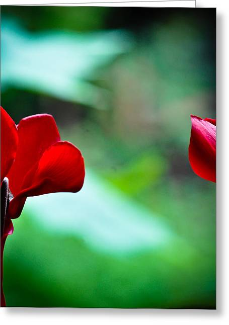 Two Red Cyclamen Look Out The Window At The Wide World Greeting Card by Ronda Broatch