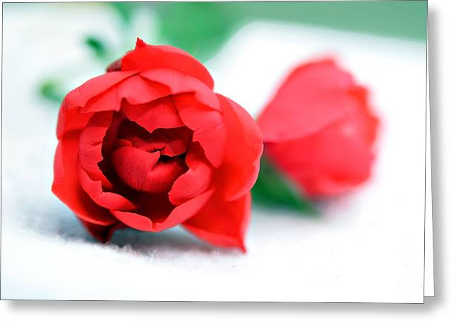 Two Rose Buds Greeting Card by Susan Leggett