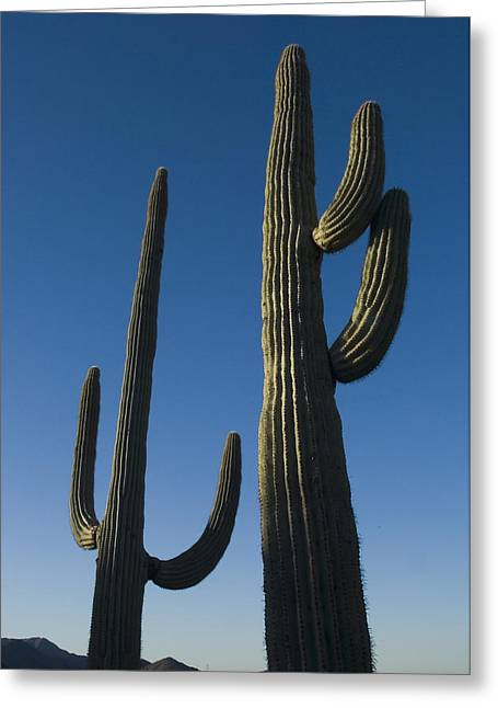 Pinnacle Peak Greeting Cards - Two Saguaro Cacti In The Sonoran Desert Greeting Card by Axiom Photographic
