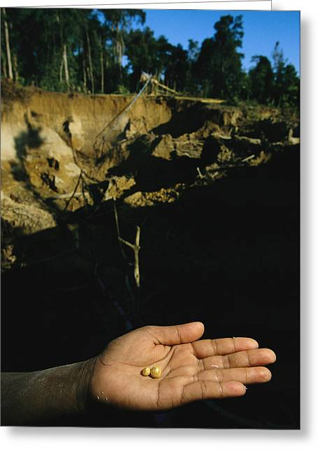 Gold Industry And Production Greeting Cards - Two Small Pellets Of Gold In A Hand Greeting Card by Steve Winter