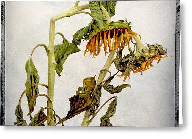 Two Sunflowers Greeting Card by Bernard Jaubert