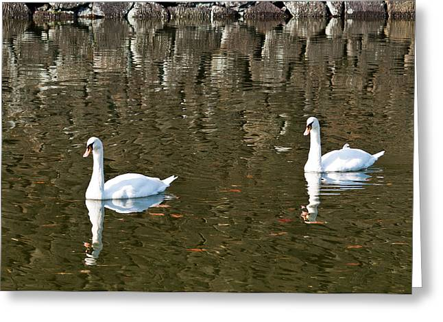 Two Swan Floating On A Pond  Greeting Card by Ulrich Schade