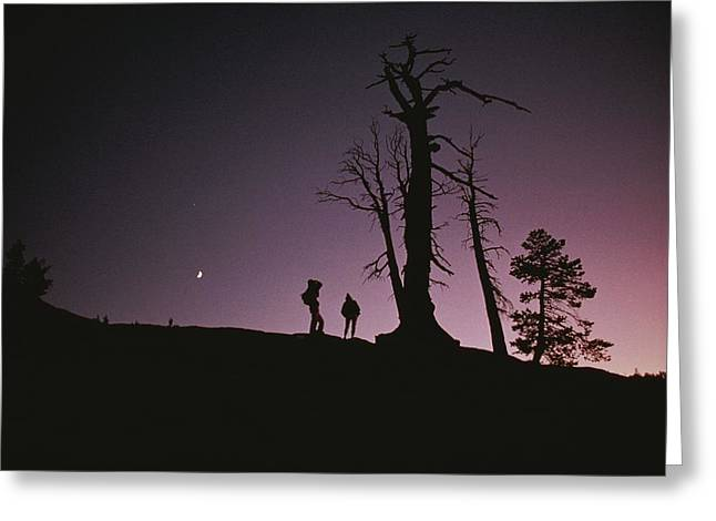 Two Tourists Standing By Trees Greeting Card by Randy Olson