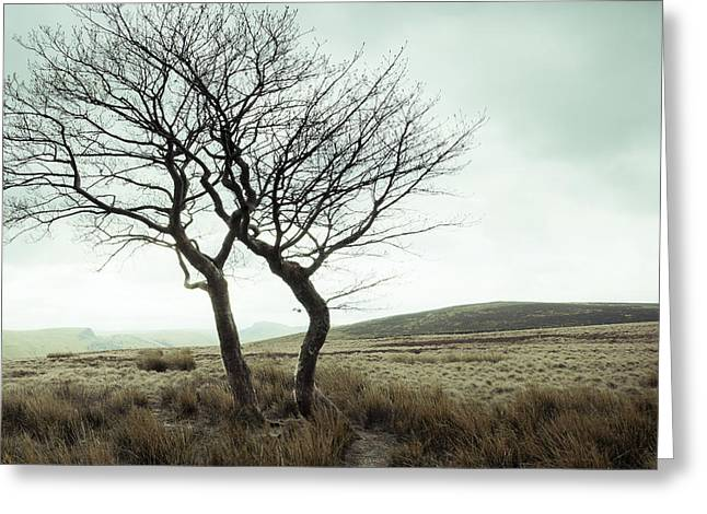 The Plateaus Greeting Cards - Two Trees Greeting Card by Martyn Williams