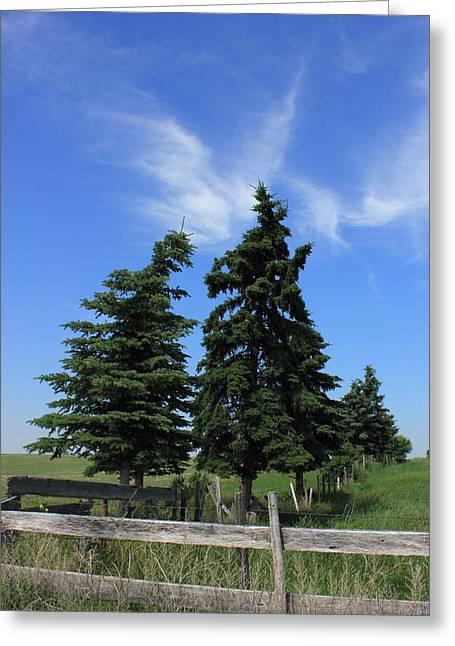 Alberta Greeting Cards - Two trees on the Alberta Prairies Greeting Card by Jim Sauchyn