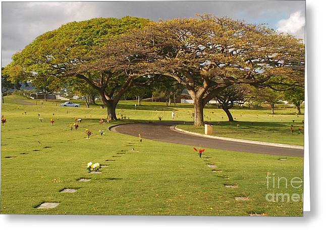 Silvie Kendall Photographs Greeting Cards - Two Trees Greeting Card by Silvie Kendall