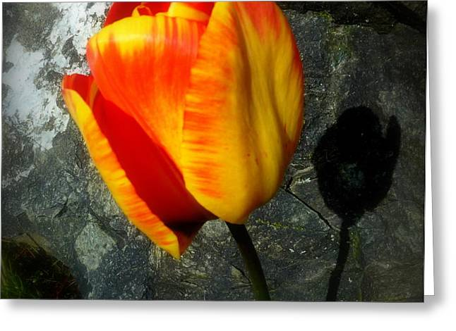 Two Tulips Shadow Scripture Greeting Card by Cindy Wright