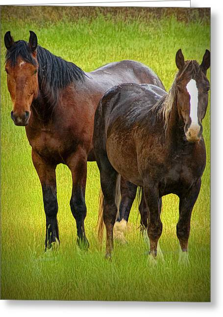 Hooved Mammal Greeting Cards - Two Western Horses in a Pasture No.1204 Greeting Card by Randall Nyhof