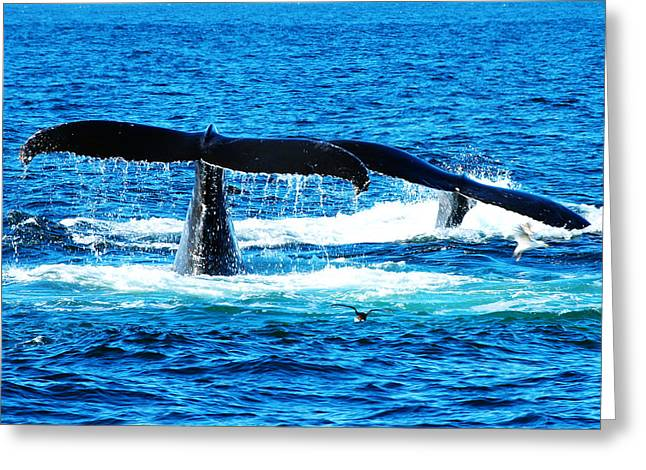 Ocean Mammals Greeting Cards - Two whale tails Greeting Card by Paul Ge
