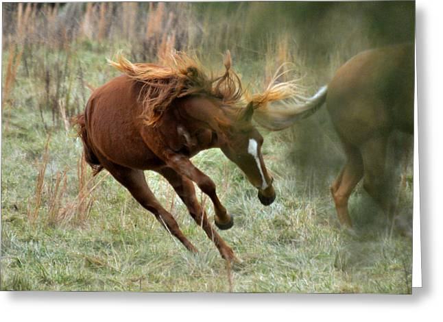 Farm Greeting Cards - Two Year Olds Frolic - c5120b Greeting Card by Paul Lyndon Phillips